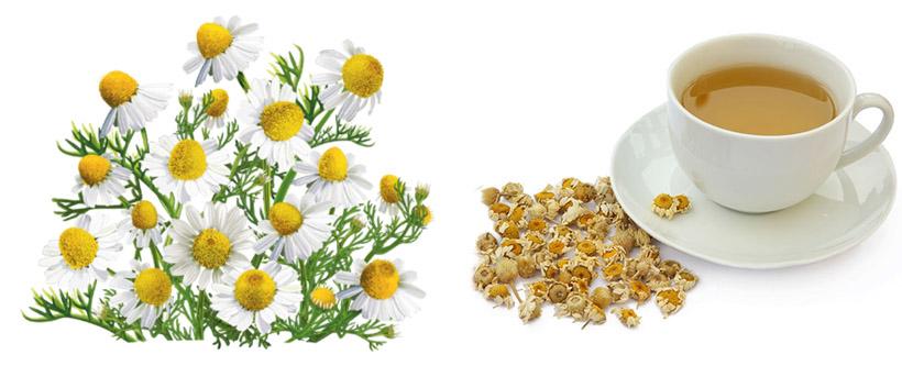 Ромашка для печени: рецепты, польза и вред